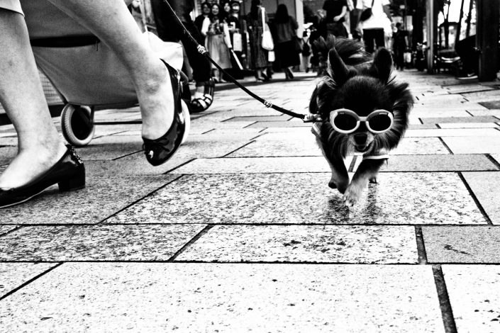 elliot erwitt like photo with little dog with sunglasses in Tokyo. Street Photography by Victor Borst
